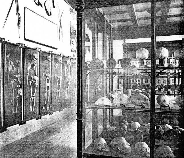 Image result for GABINETES DE CURIOSIDADES EN MUSEOS
