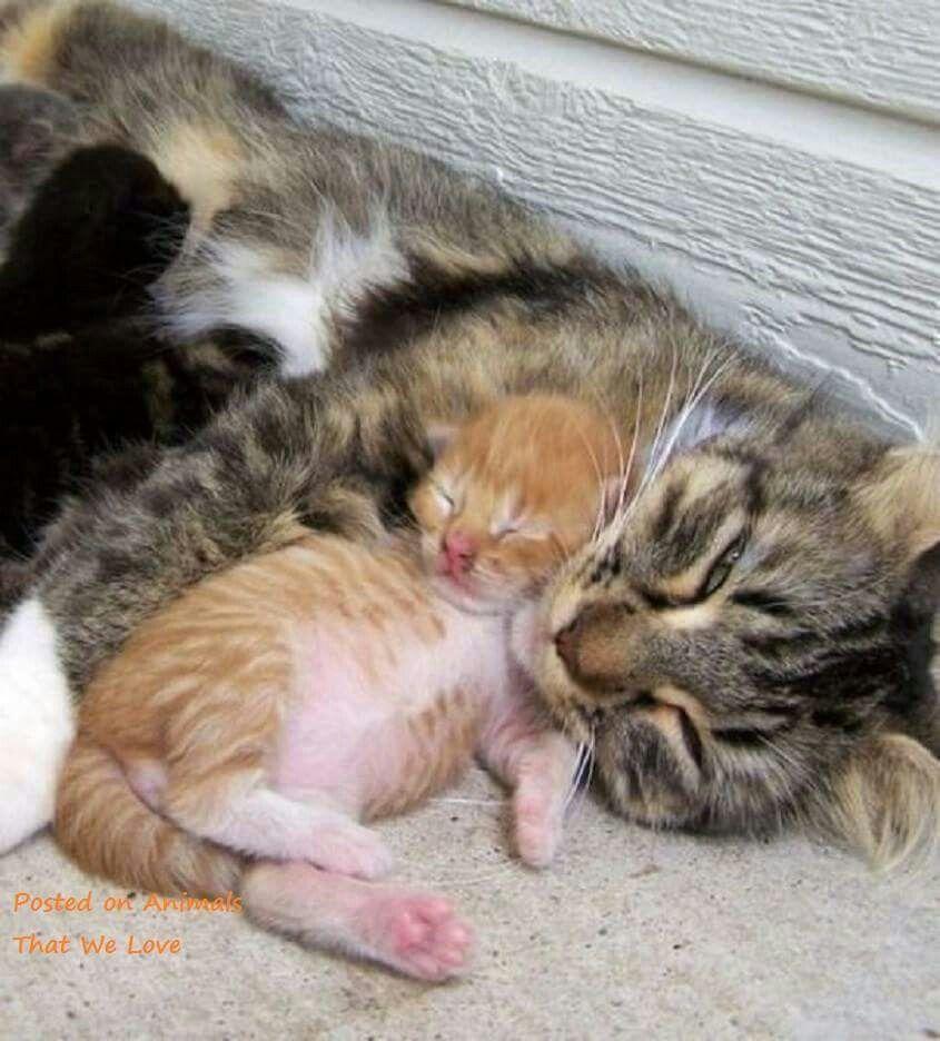 Creation Kitten Mom Cats Kittens