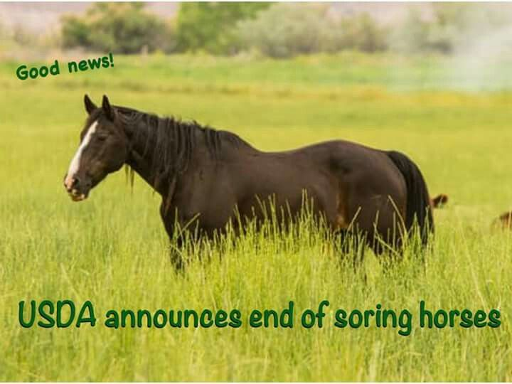 End of horse soaring 2018 horses horse care horse face