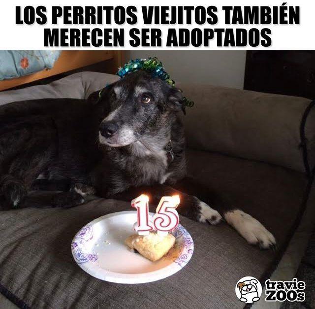 Adoptados Amados Respetados Y Mimadostienes Un Viejito En Casa Olddog Perros Dogs Perroviejo Adopcion Cuidar Animales Perros Frases Chistes De Perros