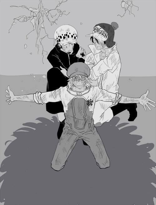 Trafalgar D. Water Law; Penguin; Shachi