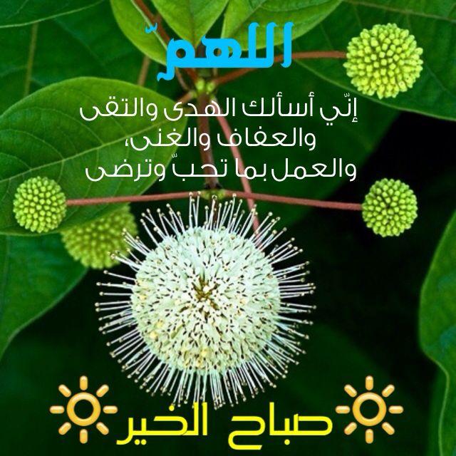 صباح الخير دعاء Islamic Quotes Words Quotes