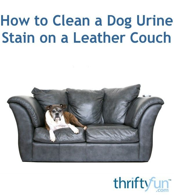 Awe Inspiring How To Clean A Dog Urine Stain On A Leather Couch Cleaning Short Links Chair Design For Home Short Linksinfo