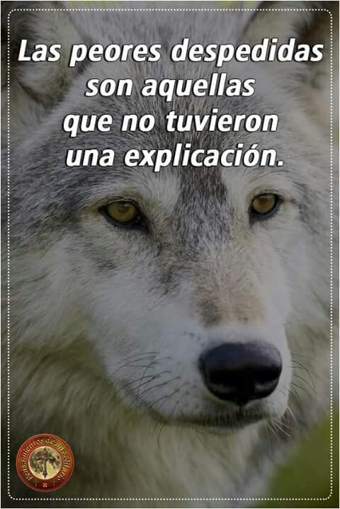 foto de Pin by Gabri Mont on Lobos Pinterest Wolf Frases and