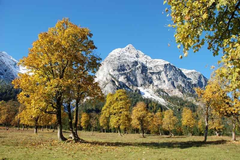 Herbstfarbung Ahornboden Ahorn Boden Karwendel Und Laub