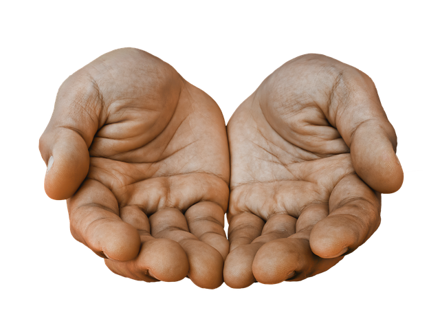 Free Image On Pixabay Hands Receiving Palm Palm Hand Reference Hand Drawing Reference How To Draw Hands