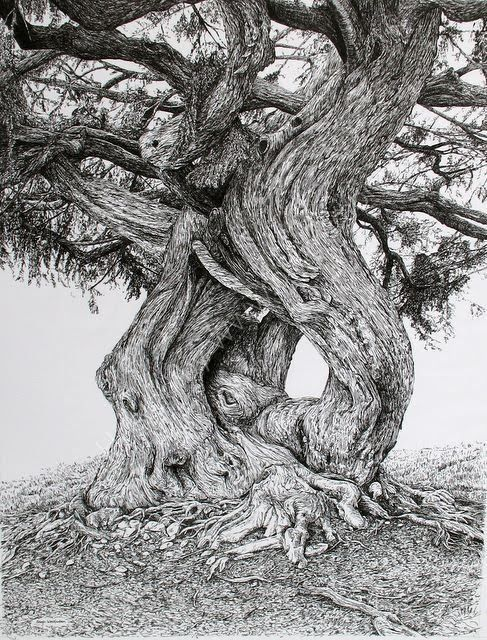 Pen & ink drawing by Sarah Woolfenden- hedgerow