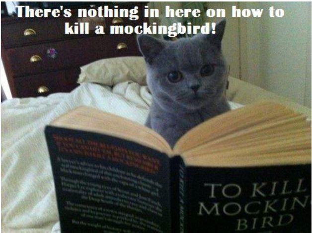 Cat Reading Cat Reading Funny Laugh