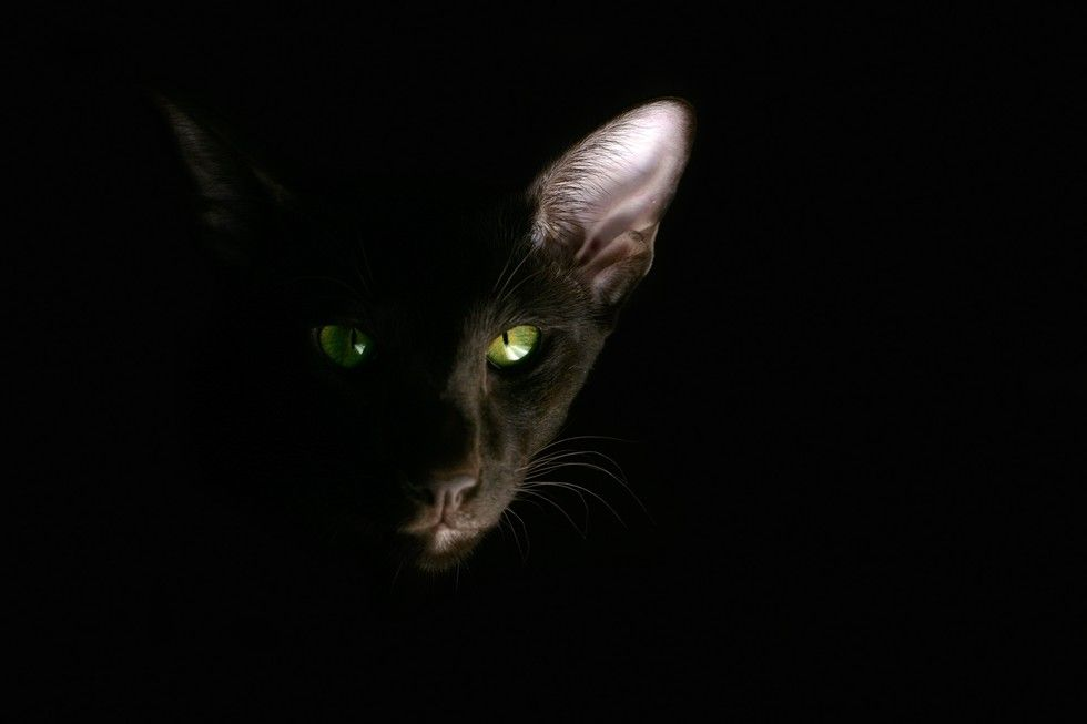 mustat pussys