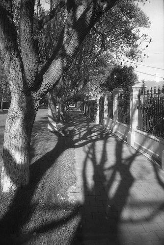 spring shadows3 2013