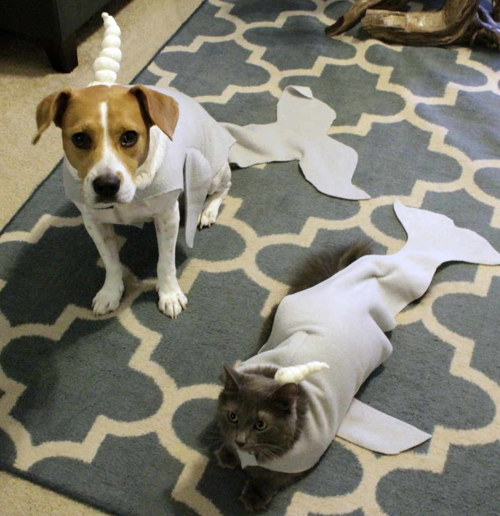 diy cat and dog narwhal pet halloween costume tutorial charleston crafted - Dog Halloween Ideas