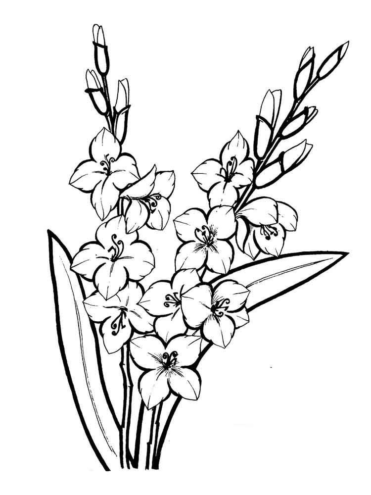 Image Result For Gladiolus Flower Outline Gladiolus Flower Flower Outline Printable Flower Coloring Pages