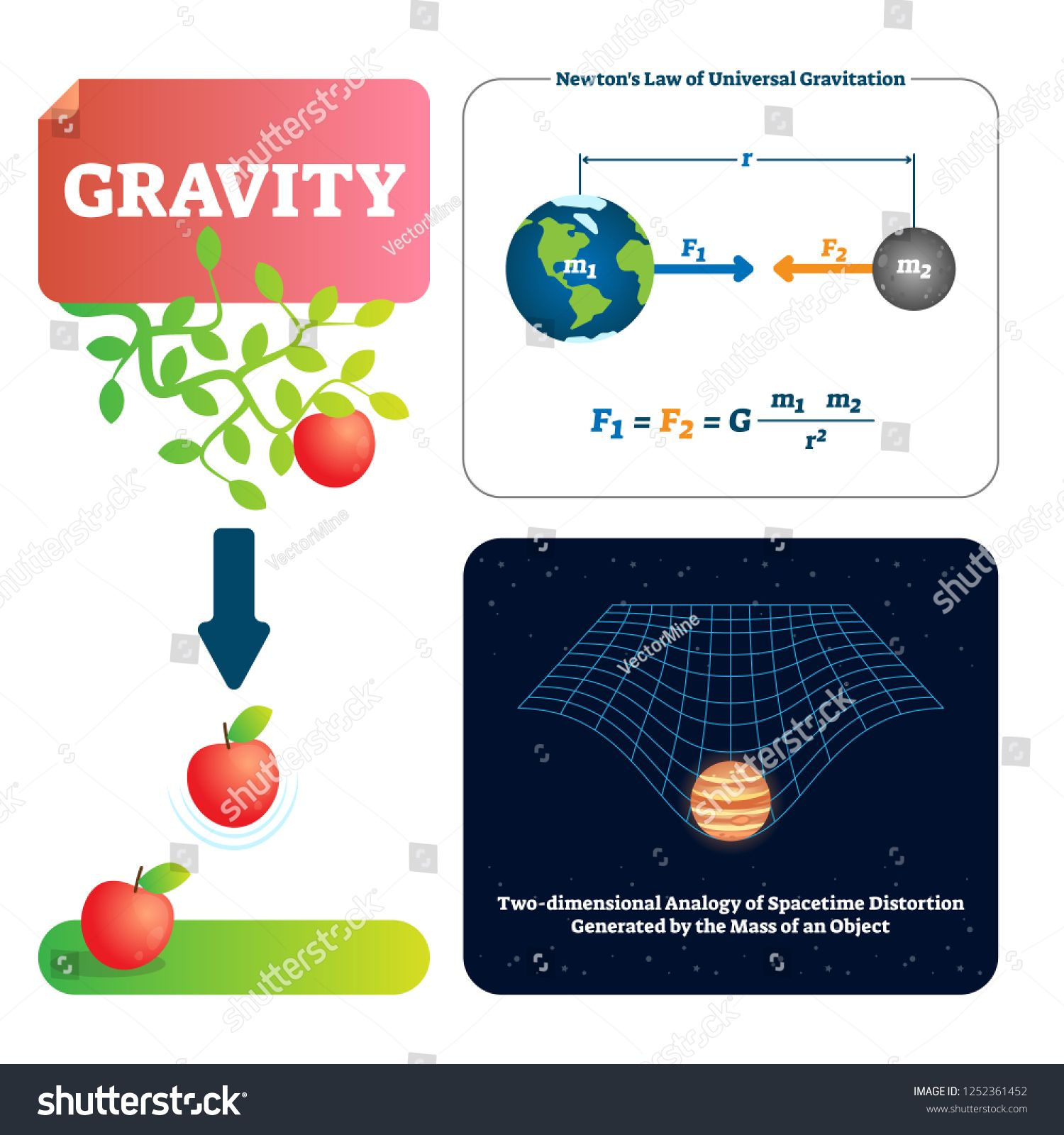 Gravity Vector Illustration Explained Natural Force To