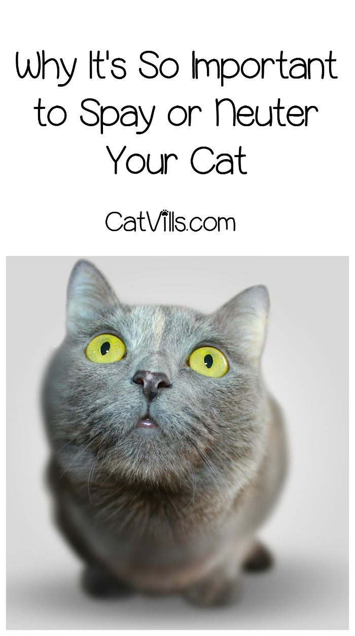 Why Is It So Important To Spay And Neuter Cats Catvills Cat Care Cats Cat Training