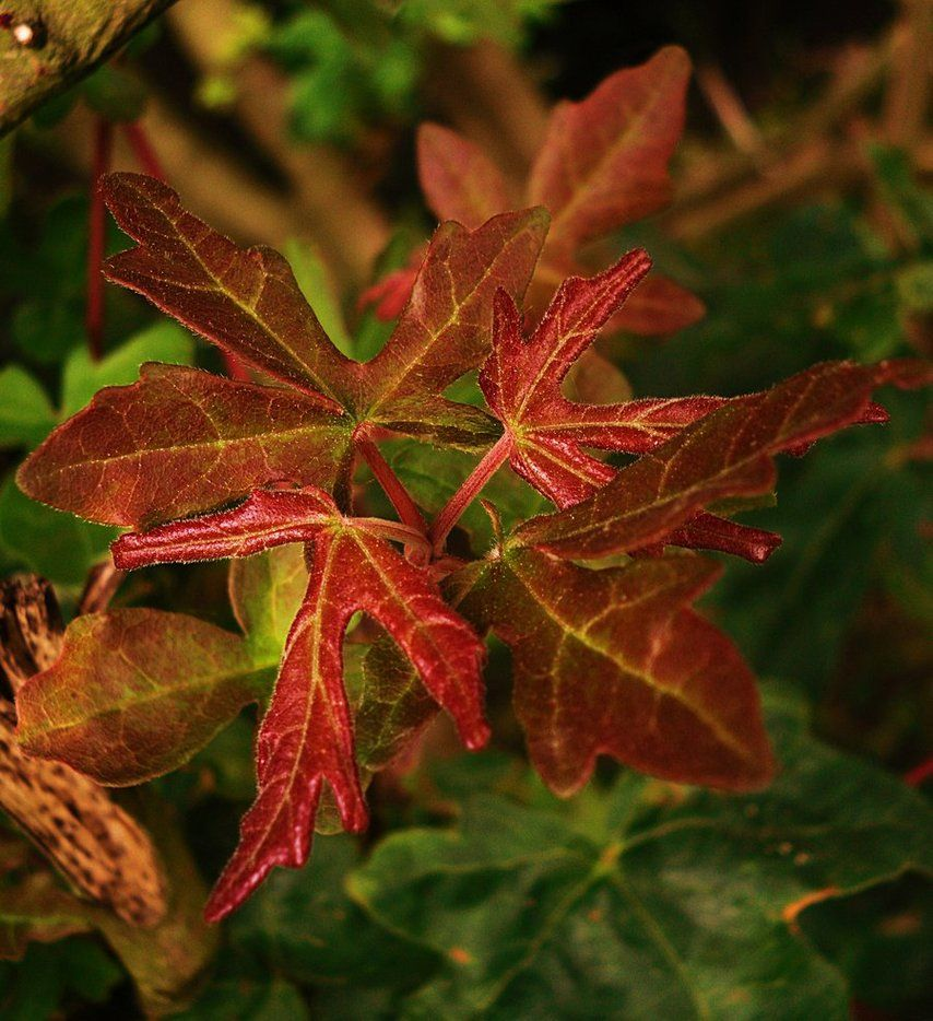 filtered leaves by secretos-oscuros
