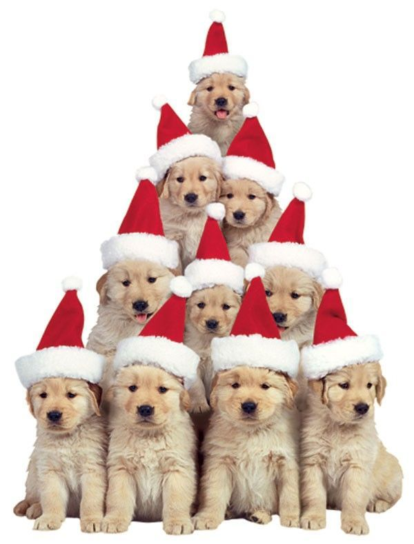 Merry Christmas Puppies.Merry Christmas Cottage On Friendship Lane Christmas