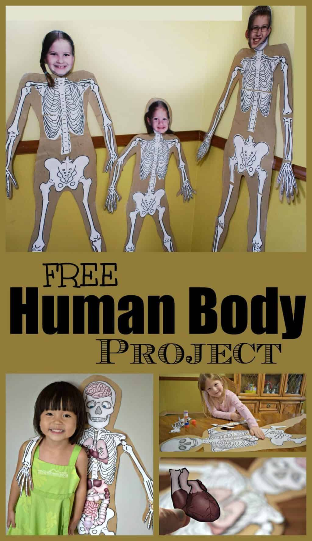 Free Human Body Project