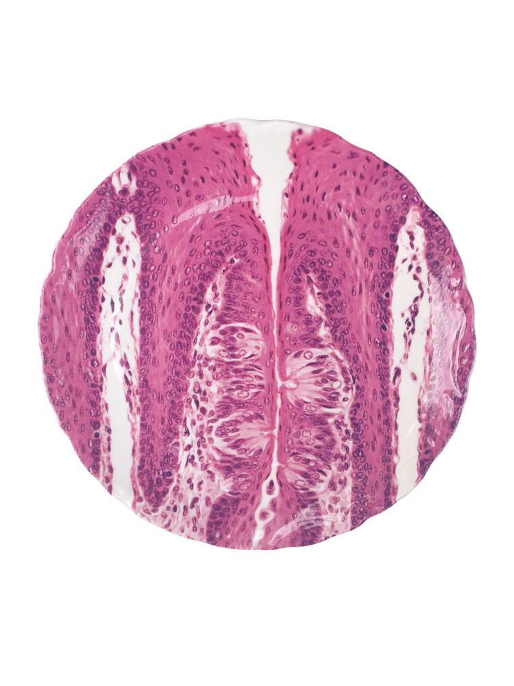 """Taste Bud Histology Plate: The study of the microscopic anatomy of cells and tissues. These plates are made from the actual images of prepared human tissue sections. The plates are 21cm (8"""") diameter made of bone china."""