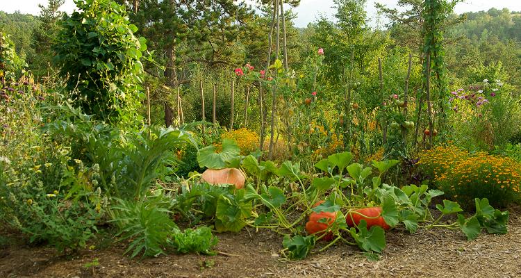 Mon Potager au Naturel est un guide numérique de jardinage naturel rédigé par un maraîcher bio. Ce livre se veut à la fois pratique mais aussi pédagogique. Ainsi, l'auteur, Gilles Dubus, ne se contente pas de vous dire quoi faire, mais il vous explique également pourquoi, et surtout dans quell