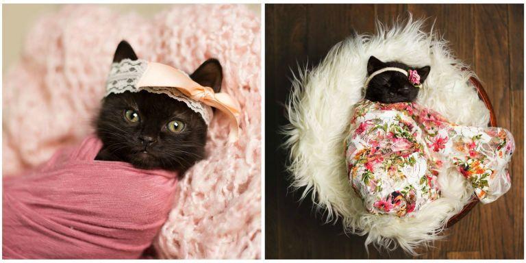 This Adorable Newborn Kitten Photo Shoot Will Make Your Heart Melt Newborn Kittens Kitten Photos Adorable Newborn