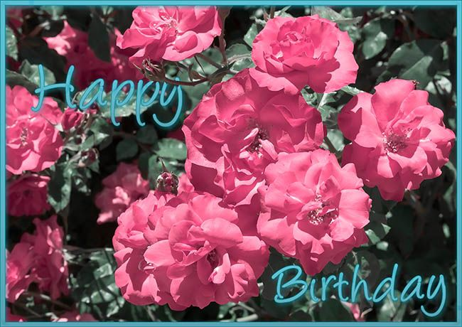 Happy Birthday Beautiful Flowers Pictures Happy Birthday Flower – Live Happy Birthday Cards