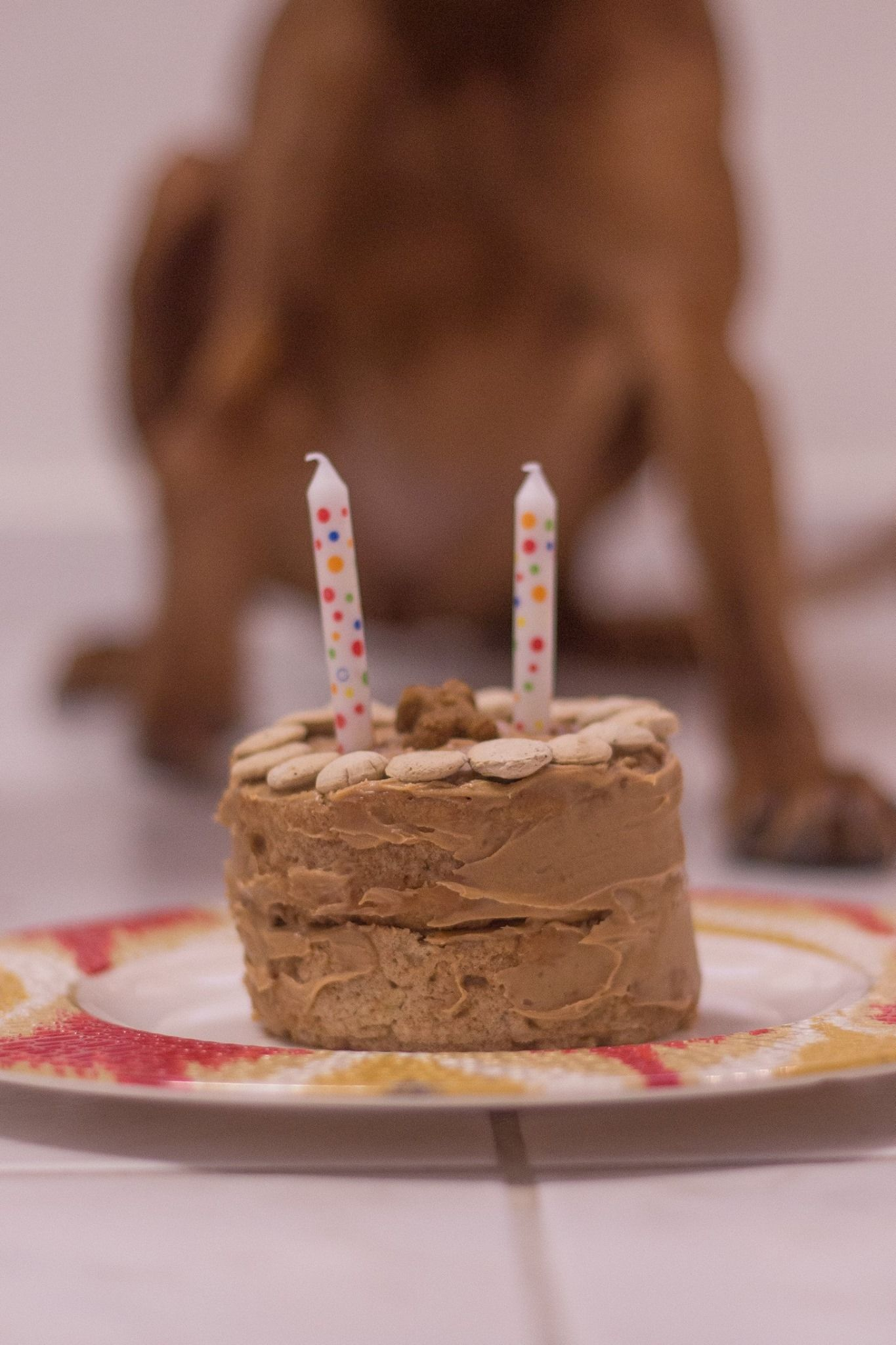Edible Birthday Cake For Dogs Ingredients 1 12 Cup Whole Wheat