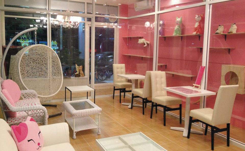 #Thailand #catcafe Charming Cats Café and Pet Shop  http://bk.asia-city.com/restaurants/article/pets-friendly-malls-cafes-in-bangkok