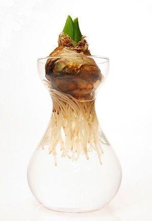DIY - 5 idées faciles pour des fleurs de jacinthes à l ...