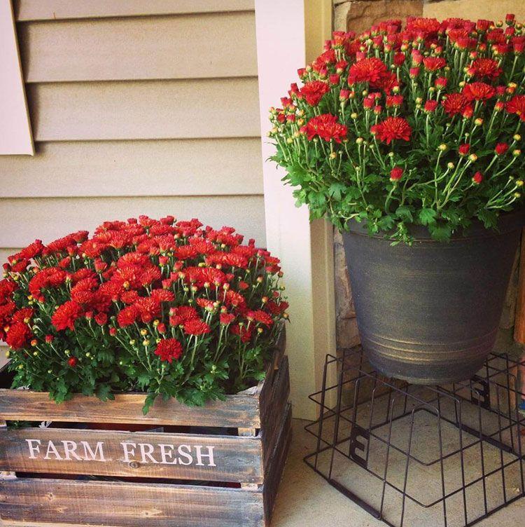 67 Best Front Door Flower Pots Pretty Porch Planters 2020 Guide Porch Flowers Front Porch Flowers Front Porch Flower Pots