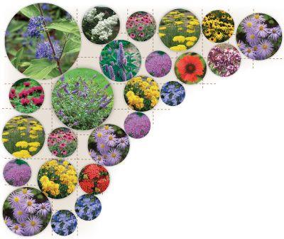 Butterfly Garden Garden Design and Plants – Pre Planned Butterfly Garden