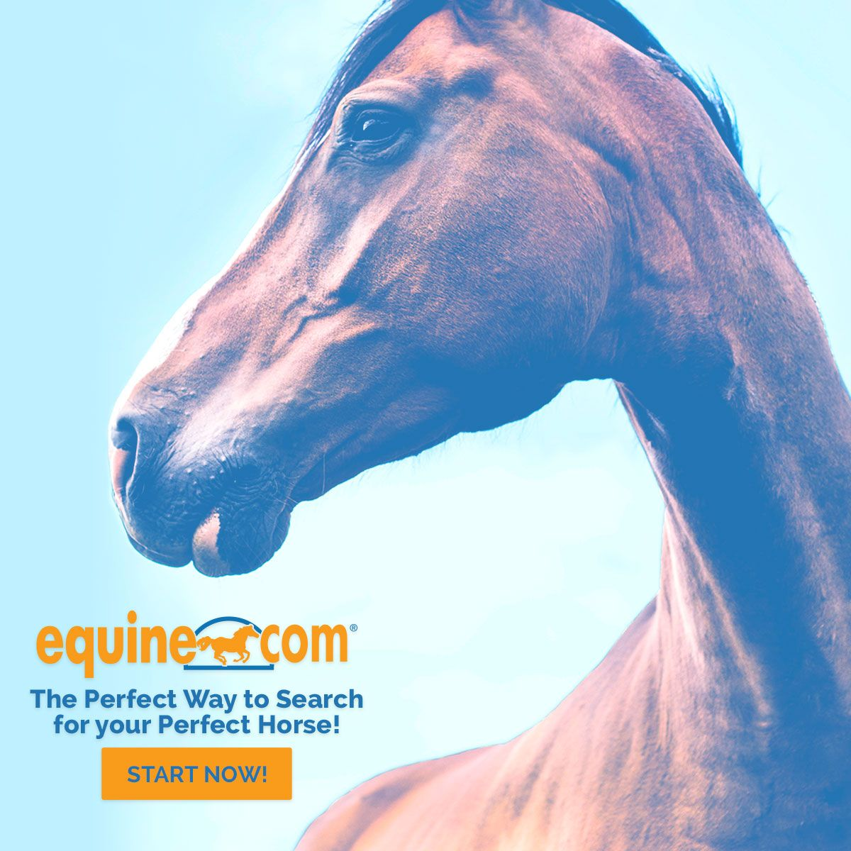 Finding Your Dream Horse Might Only Be A Few Clicks Away If You Re On The Hunt For A New Dressage Partner Don T Forget To Ch Horse Classifieds Equines