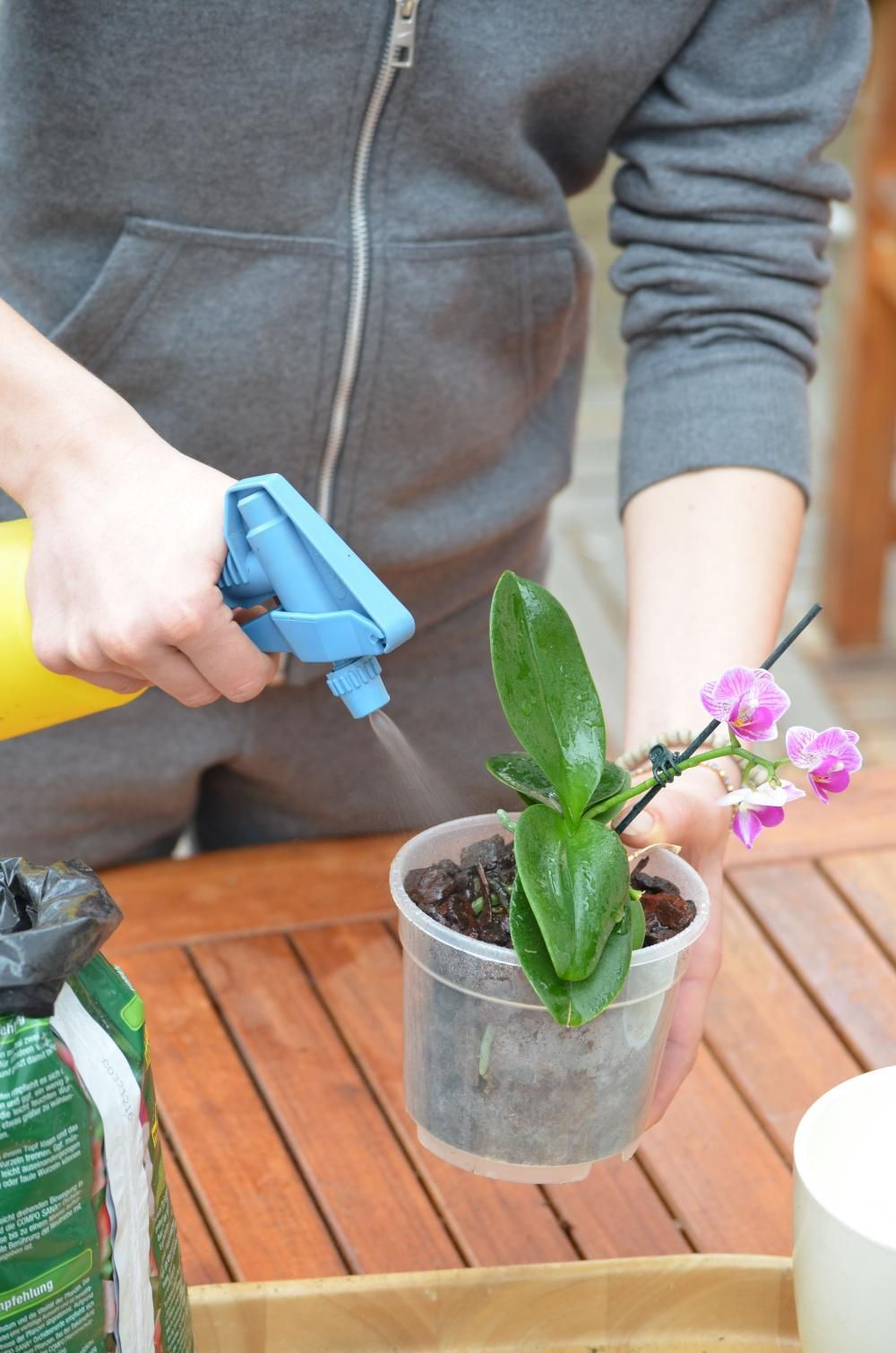 Welche Erde Für Orchideen