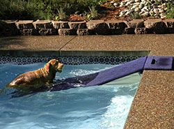 Water Ramp For Dogs The Carousel Horse