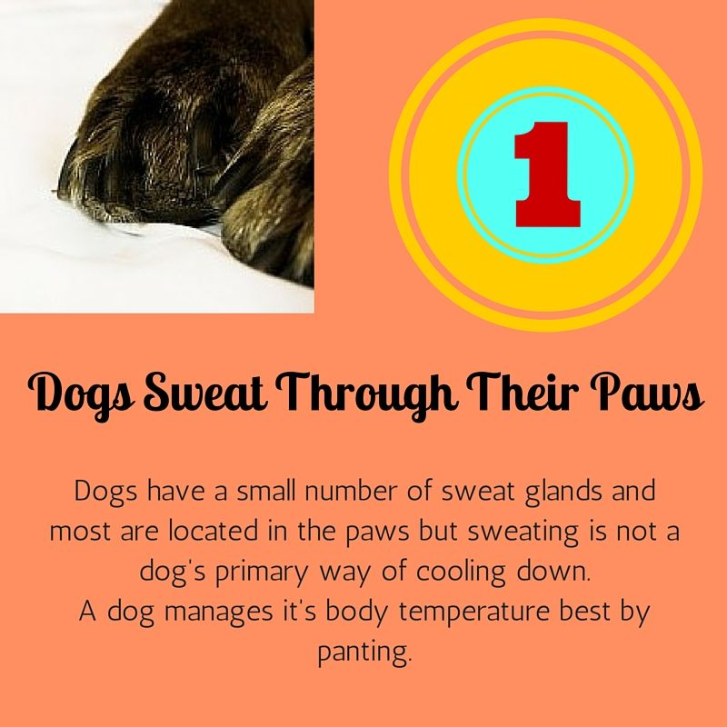 Pin By Mucky Pupz Dog Grooming Doncaster On Amazing Dog Facts