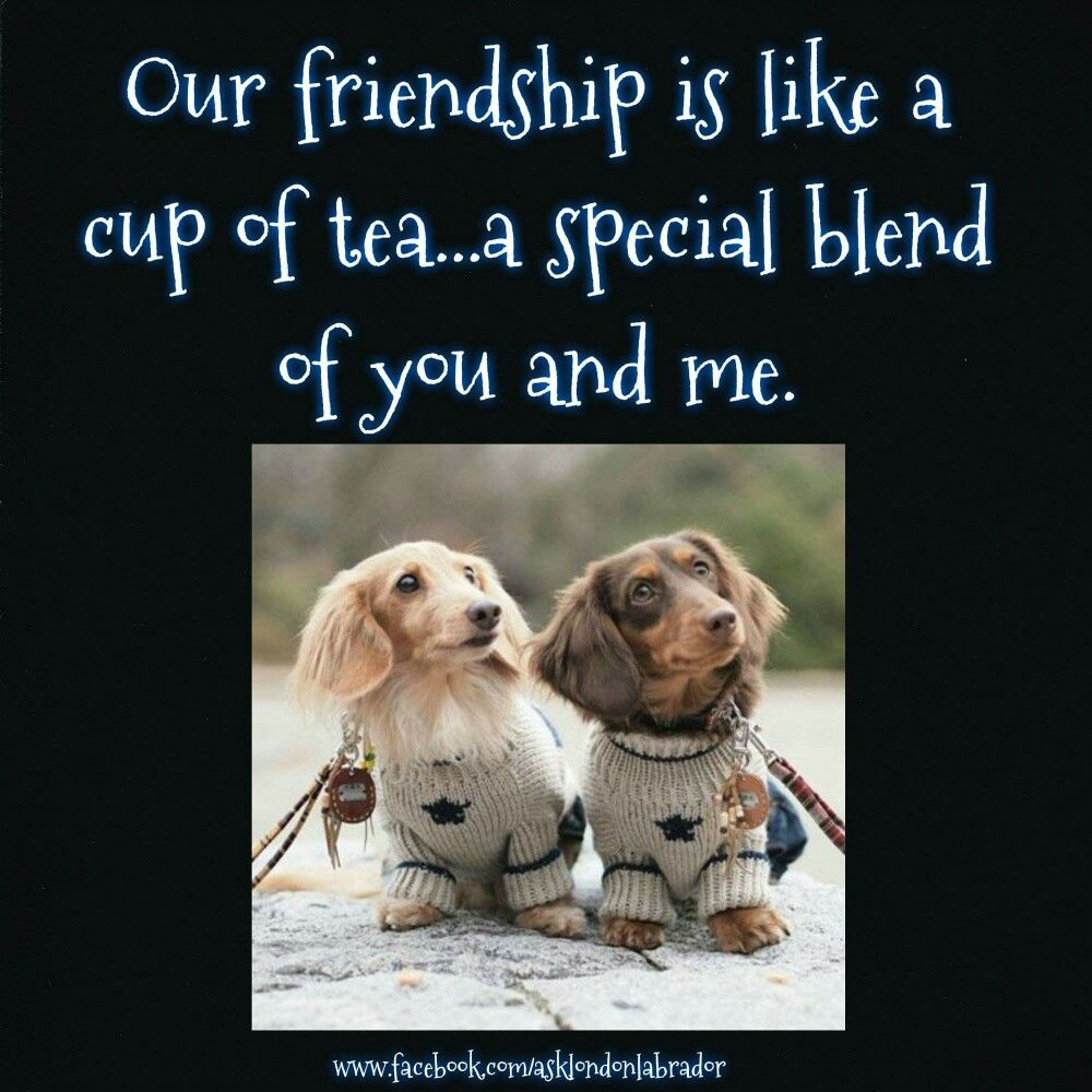 Quotes About Dog Friendship Friendship  Dachshunds  Quotes  Proverbs  Blessings  Sayings