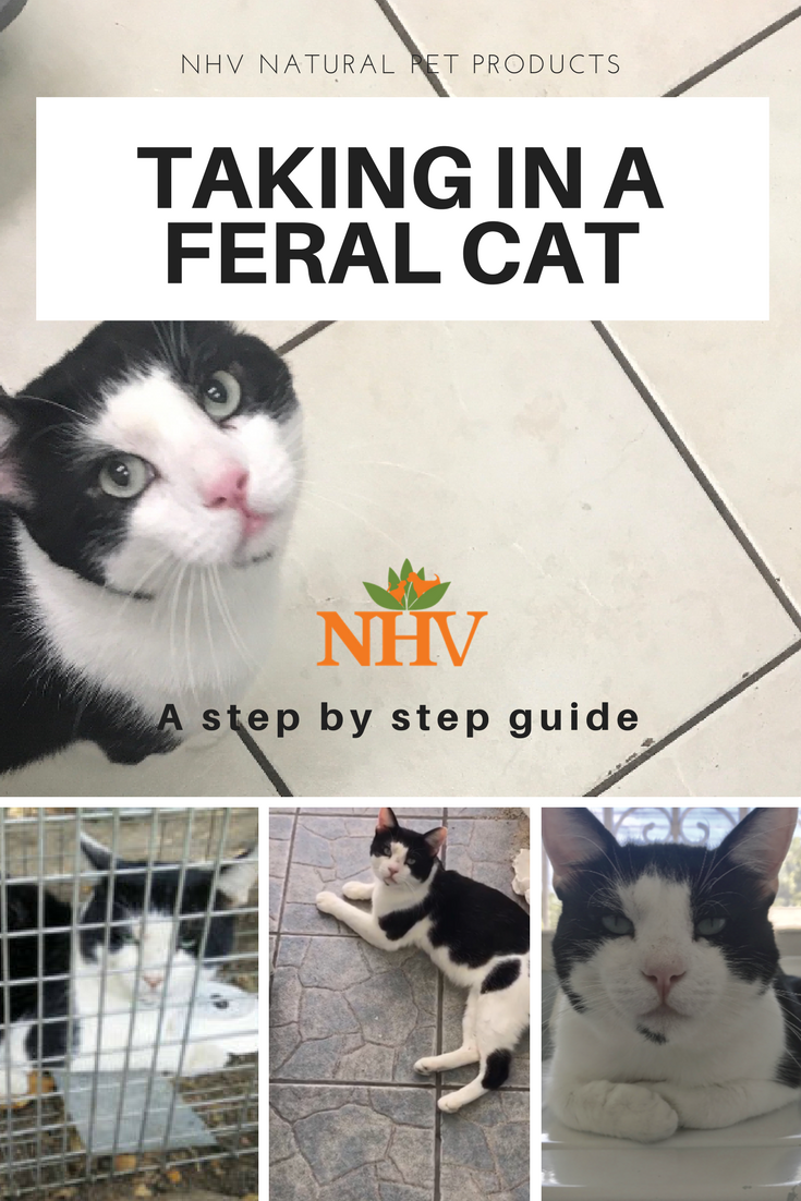 Blog Nhv Natural Pet Products Feral Cats Feral Cat Shelter Cats