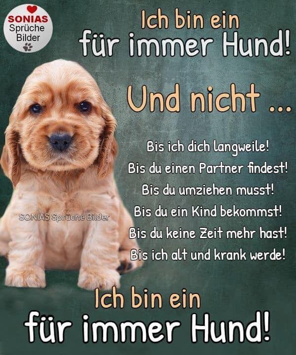 Pin Von Annette Klaus Auf Cute Dogs Hunde Gedichte Hundespruche Hunde