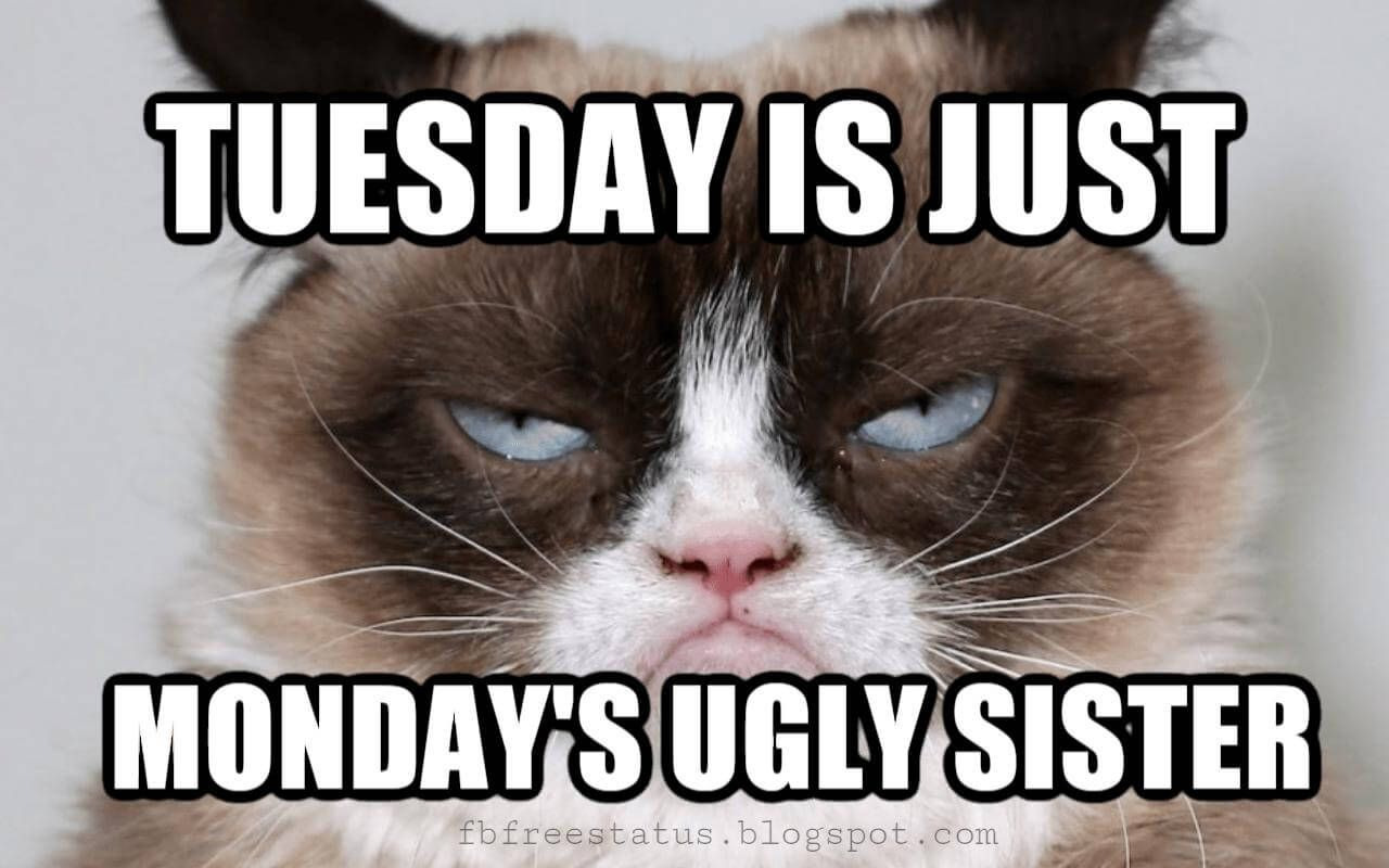 Funny Tuesday Quotes to be Happy on Tuesday Morning