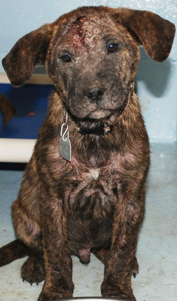 Rescued By Humane Society Of Northeast Florida Please Help With