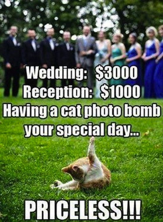 We Love These Wedding Fails So Much We'd Marry Them #funny #pictures #photo #pics #humor #comedy #hilarious #wedding #weddings #fail #fails