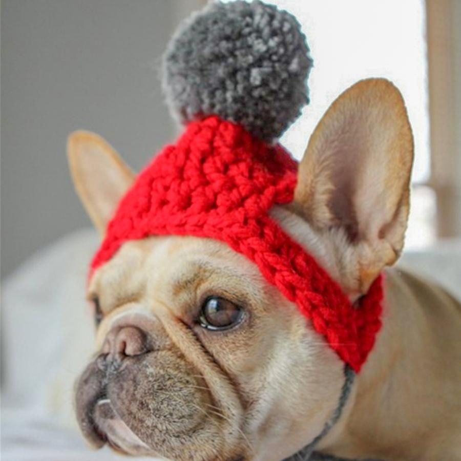 Headwear Frenchiely (With images) Halloween pet