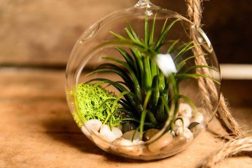 Boss Day 9 Gift Ideas For Your Boss Air Plants Air Plant