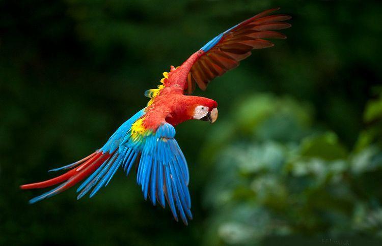 75 Ideas De Especies De Aves Aves Especies Criadero