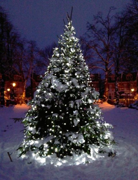 outside christmas light ideas0047 (With images)   Outdoor ...