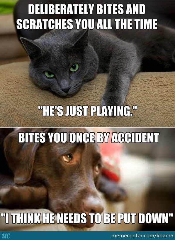 Cats And Dogs Cat And Dog Memes Funny Cats And Dogs Cat Quotes Funny
