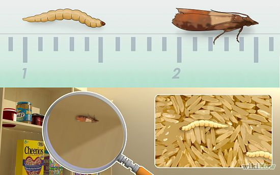 4 Ways To Get Rid Of Pantry Moths Wikihow