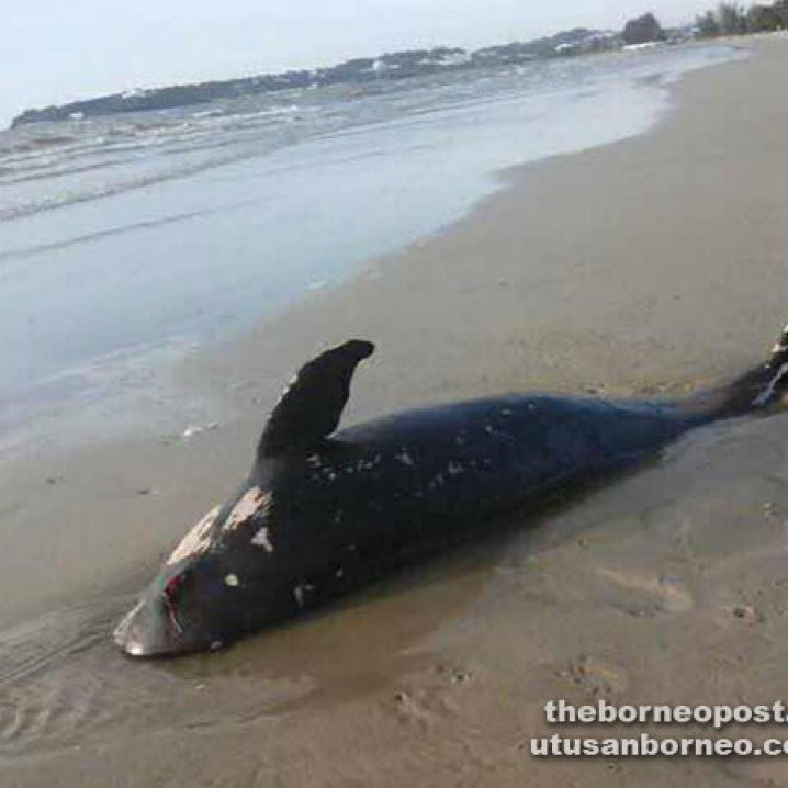 MoreMonmouthMusings » Blog Archive » Bottlenose dolphins