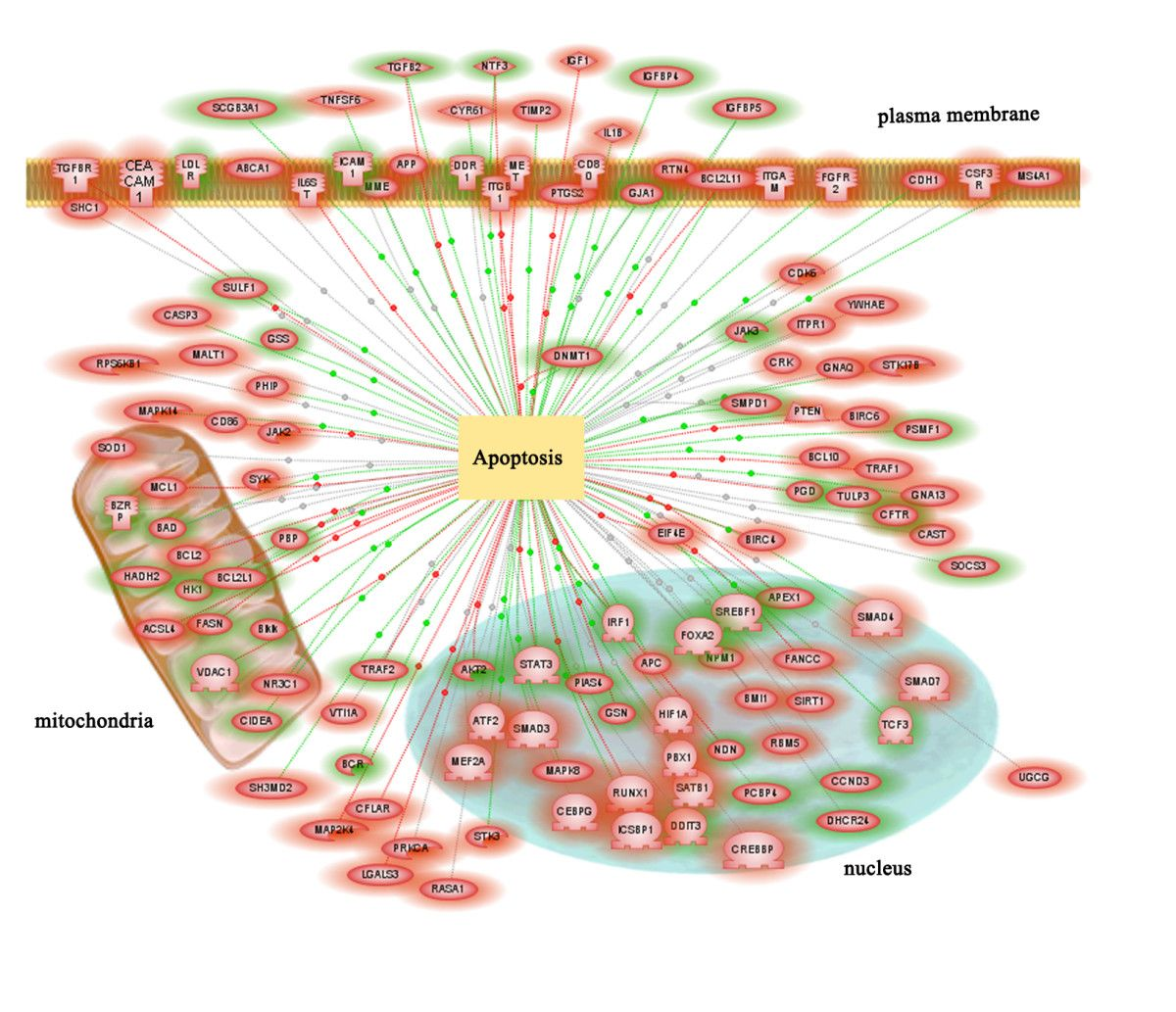 Genes Involved In Apoptotic Pathways Gene Expression Plasma