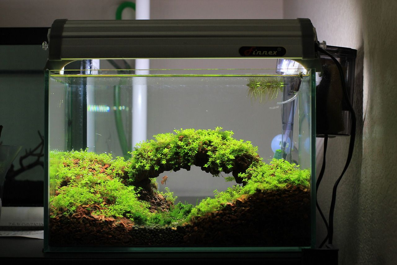 Aquascape tumblr garnelen pinterest terraria for How to setup a betta fish tank
