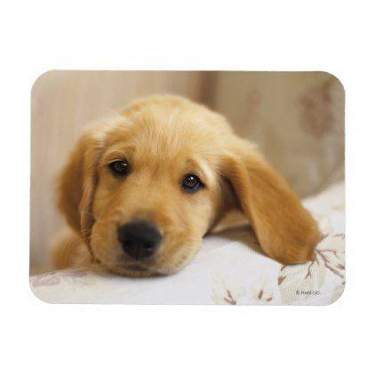 Golden Retriever Puppy Magnet Golden Retriever Puppy